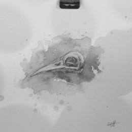 Seldon Hunt - Skull Study 4